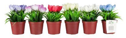 Picture of Edco Flower Impatiens