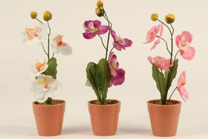 Picture of Edco Orchid Pot 25cm 3 Assorted