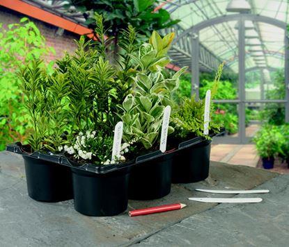 Picture of Ambassador Plant Labels  Pencil 6 10cm