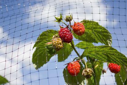 Picture of Ambassador Fruit Cage Net Black 150m x 2m