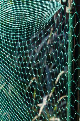 Picture of Ambassador Garden Net Green 15mm x 3 x 2m
