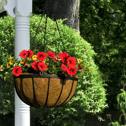 Picture of Ambassador Flat Bar Hanging Basket 16