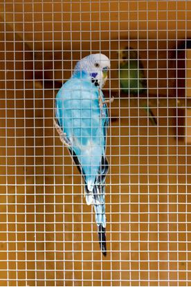 Picture of SupaGarden Cage  Aviary Welded Panel 0.6 x 0.9m