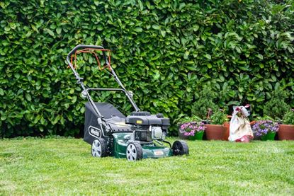 Picture of Webb Petrol Classic Self Propelled Lawnmower