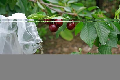 Picture of Agralan Fruit Tree Sleeves Pack 5